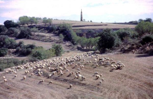 Ramat d'ovelles vora el Sagrat Cor