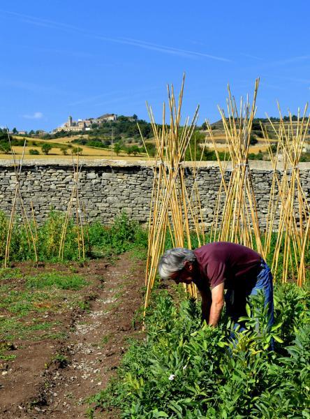 13.08.2012 Detall d'un hort  Els Hostalets -  Angelina Llop