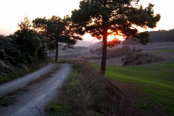 Camí de Suró a l'Albió - Suró