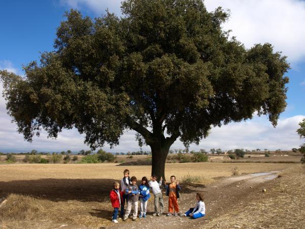 excursió infantil a l'alzina del Mestret - Guissona