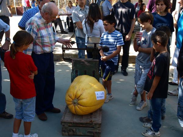 06.10.2012 El 5è Concurs de Carbasses Gegants va comptar amb una bona participació  Sedó -  Jaume Moya