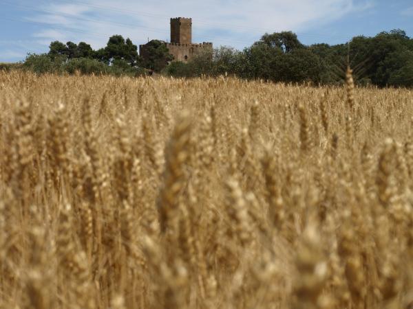 18.10.2012 Castell de les Sitges  Florejacs -  Camins de Sikarra