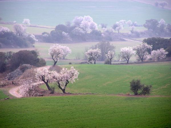 23.04.2007 On ara hi ha la basa del canal hi havia aquest paisatge  El Canós -  LOM