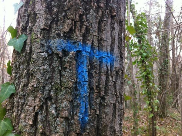 Marques blaves als arbres - Ridaura
