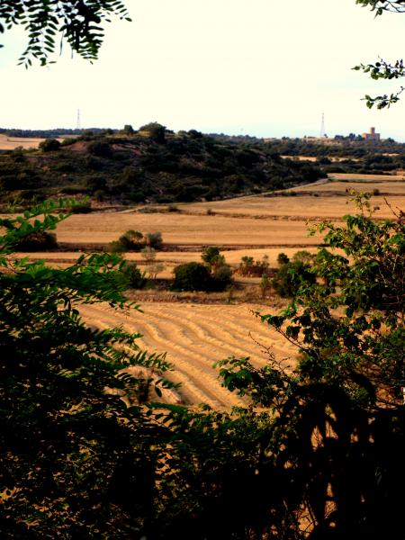 #CollitaSegarra. La collita del cereal un signe d'identitat de la Segarra.