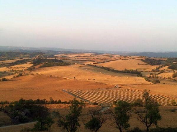 13.07.2013 Els camps de cereals s'allarguen fins a l'horitzó  Massoteres -  Josep Vilaró