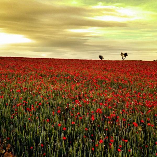 15.07.2013 Foto guanyadora del concurs d'Instagram lasegarraclic, en la categoria de Natura i Paisatge  -  Anna Pla