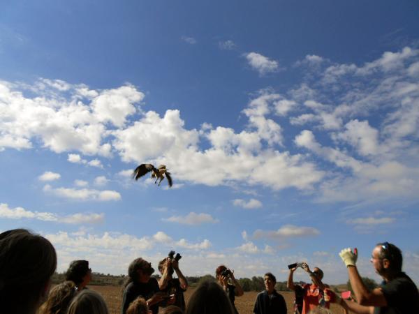 06.10.2013 Dia Mundial de les Aus, alliberant un aligot  Riber -  Ajuntament TiF