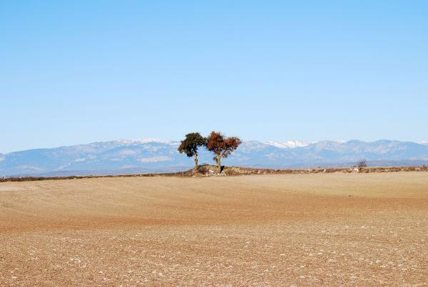 15.12.2013 Paisatge a l'altiplà  Segarra -  Ramon Sunyer