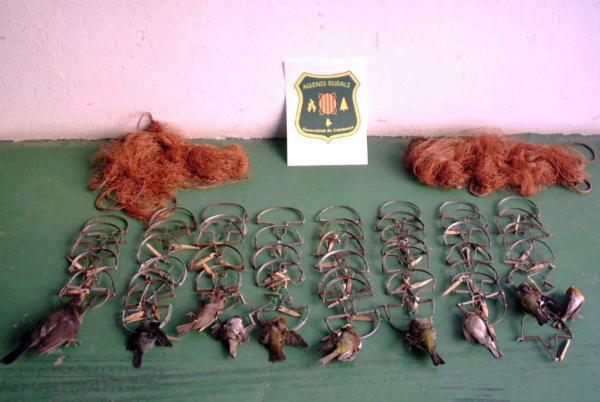 Besc, parany i filats són tècniques emprades a la caça il·legal d'aus