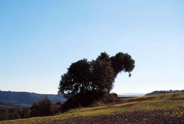02.02.2014 Paisatge  Sant Pere del Vim -  Ramon Sunyer