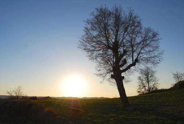 23.02.2014 Apuntant la primavera  Torà -  Pele