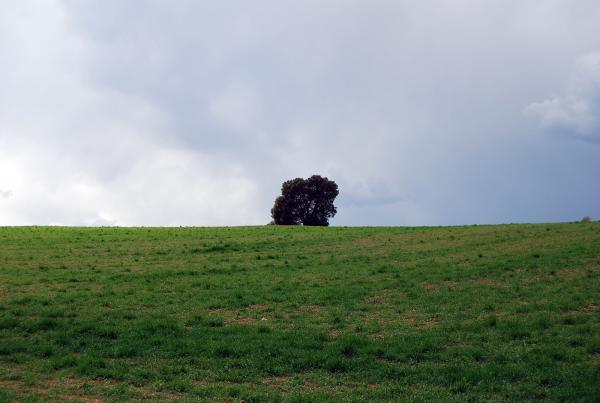 24.03.2014 Els verds omplen el terra  Alta Segarra -  Ramon Sunyer