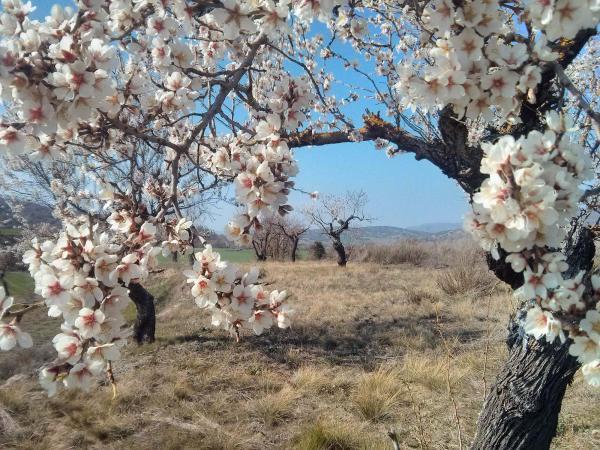 23.03.2014 Ametllers florits  Vall del Llobregós -  Ramon Sunyer