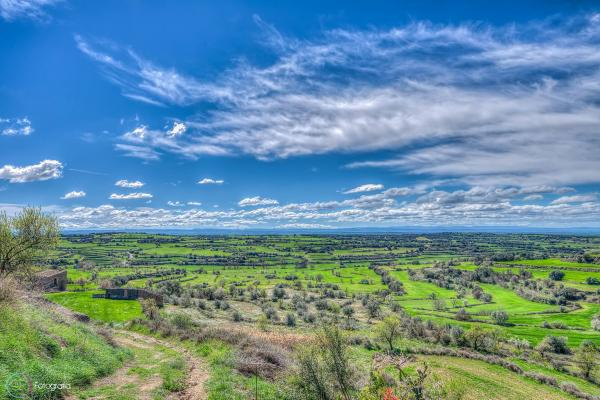 23.03.2014 Els verds dels sembrats contrasten amb el blau del cel  Florejacs -  QR Fotografia
