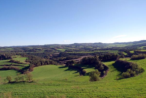 Els verds dels sembrats omplen els trossos entre Argençola i Aguiló - Argençola