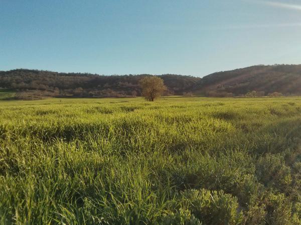 07.04.2014 Sembrat a la vall del Llobregós  Torà -  Ramon Sunyer