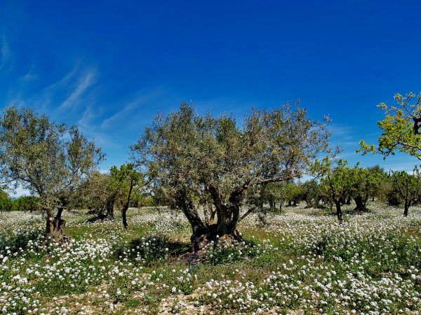 11.04.2014 Camps d'ametllers  Tarroja de Segarra -  Jaume Enrich