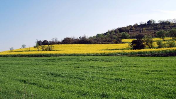 14.04.2014 Contrast entre colza i cereal  Torà -  Ramon Sunyer