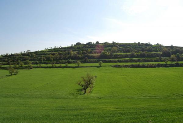 Els verds prenen força prop de Palouet