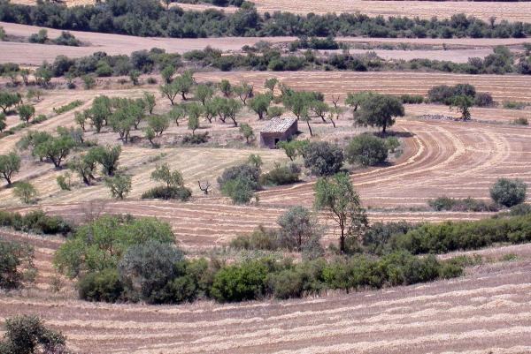la cabana és un element caràcterístic del paisatge segarrenc - Vicfred