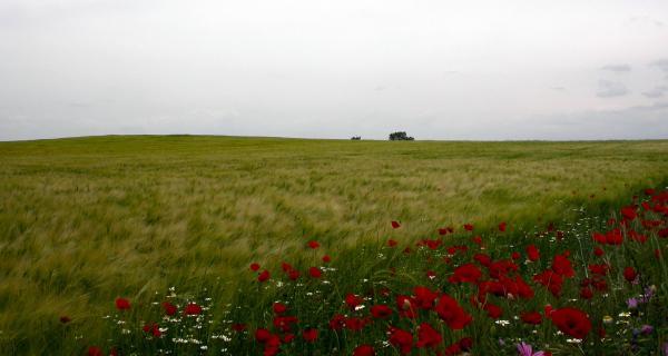 11.05.2014 la Segarra s'omple de primavera   segarra -  Ramon Sunyer