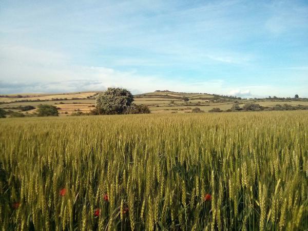 12.05.2014 paisatge  Vicfred -  Ramon Sunyer