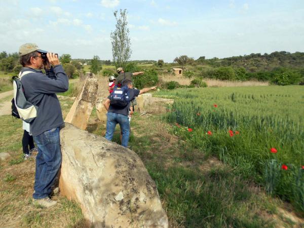 11.05.2014 Dia Mundial de les Aus Migratòries als Patamolls  Granollers -  Ajuntament TiF