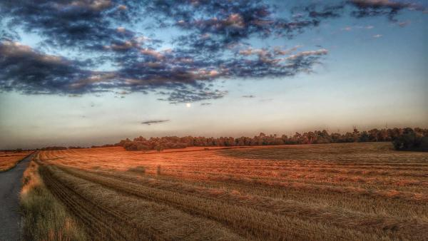 12.07.2014 posta de sol  L'Ametlla de Segarra -  Ramon Sunyer