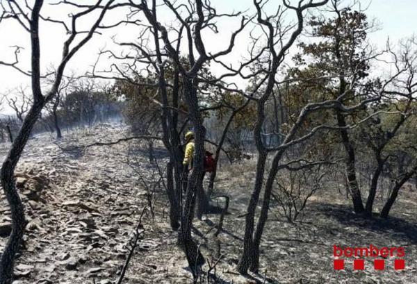 Detall de la zona cremada a Sant Guim de la Plana - Sant Guim de la Plana