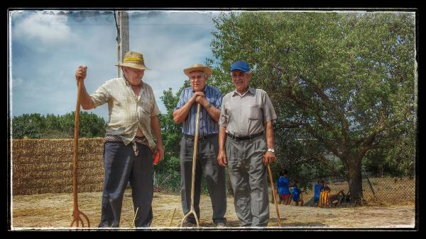 El 38% dels titulars d'una explotació agrària té 65 anys o més - Sant Antolí i Vilanova