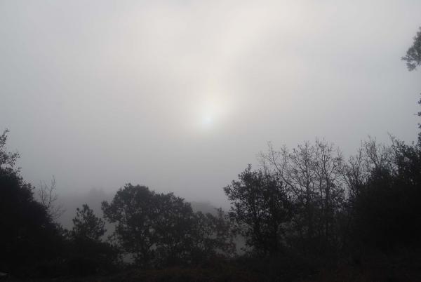21.12.2014 sol enboirat  Llanera -  Ramon Sunyer