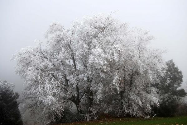Els colors de la Segarra: l'hivern
