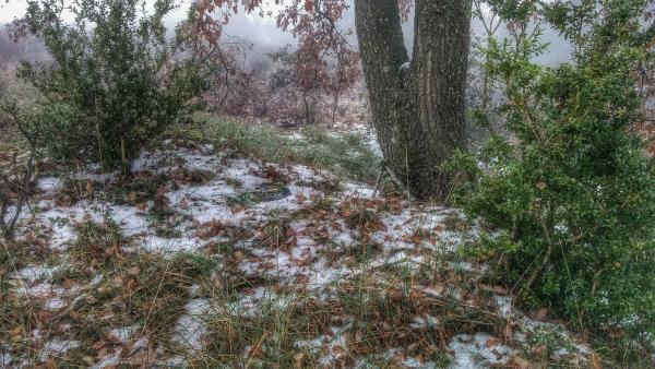 26.12.2014 gebrada al bosc  Fontanet -  Ramon Sunyer