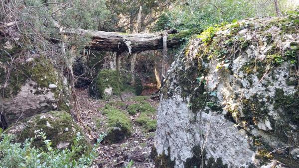 04.01.2015 Capricis boscans  Bellprat -  Ramon Sunyer