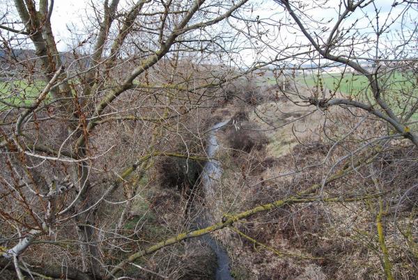 21.02.2015 El riu Ondara  Sant Pere dels Arquells -  Ramon Sunyer