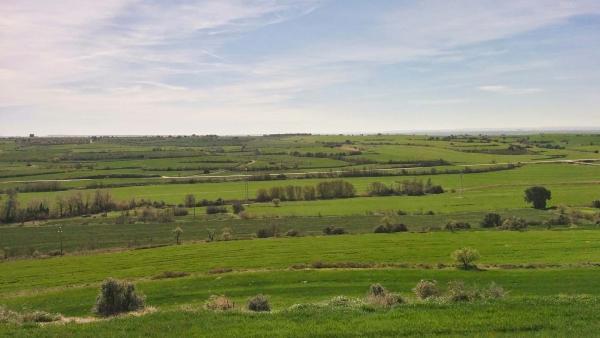 Camps de cereal a la Morana