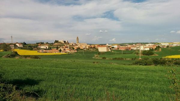 26.04.2015 Els mars verds dels cereals  Calaf -  Ramon Sunyer
