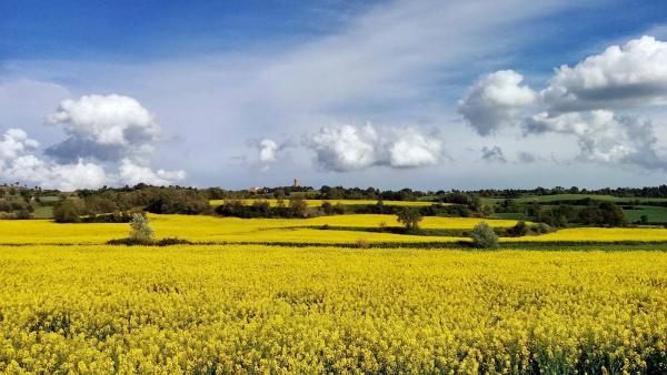 26.04.2015 Els mars grocs de la colza  La Manresana -  Ramon Sunyer