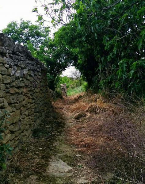02.05.2015 camí dels horts  Riber -  Ramon Sunyer