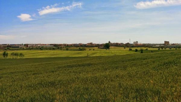 11.05.2015 els blats encara verds  Guissona -  Ramon Sunyer