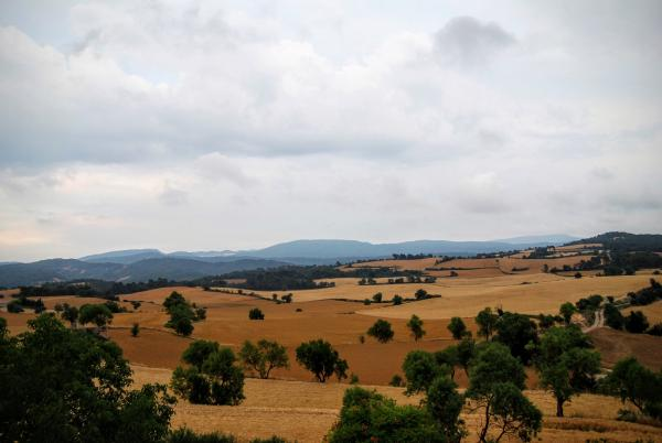 14.06.2015 camps de cereal  Guialmons -  Ramon Sunyer