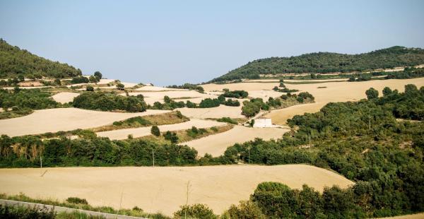 24.06.2015 Paisatge  Rocamora i Sant Magí de la Brufaganya -  Ramon Sunyer