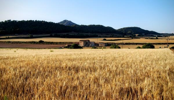 24.06.2015 paisatge  Vallespinosa -  Ramon Sunyer