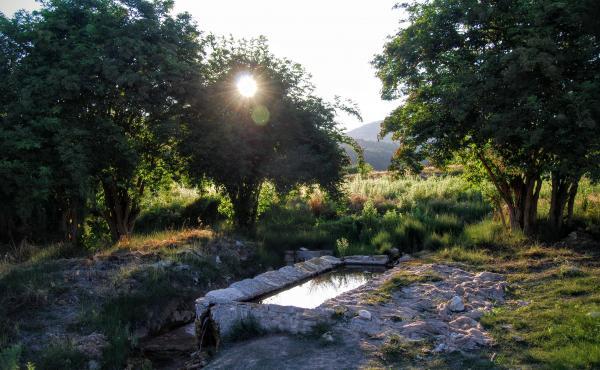 24.06.2015 safareig  Vallespinosa -  Ramon Sunyer