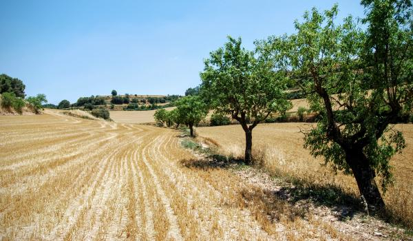 28.06.2015 Paisatge de la rasa del Coguelera  Montlleó -  Ramon Sunyer