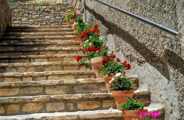 28.06.2015 detall floral  Estaràs -  Ramon Sunyer