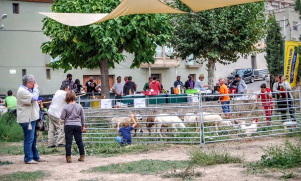 04.10.2015 animals de granja  Sedó -  Ramon Sunyer
