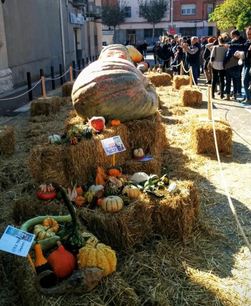 01.11.2015 concurs de carbasses  Calaf -  Ramon Sunyer