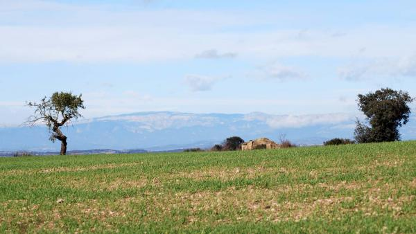 22.11.2015 paisatge  Tarroja de Segarra -  Ramon Sunyer